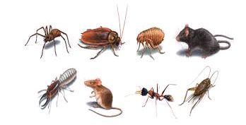 Pest picture